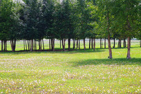 草甸野花绿树林