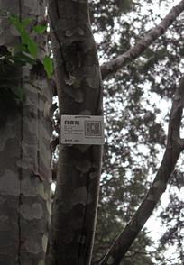 北京颐和园内白皮松树干