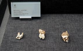 巫山博物馆展品