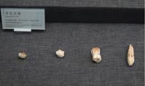 巫山龙骨坡遗址出土步氏巨猿齿骨