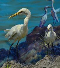 鸟类标本白鹭