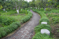 校园林荫步道