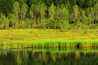 湿地水塘水草