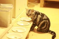 食盆前的猫咪