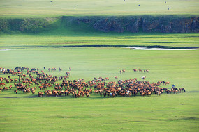 草原马奔跑