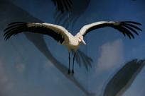 旅鸟飞翔标本