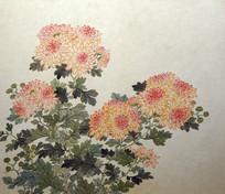 清代关槐《洋菊十六种图》册之锦麒麟