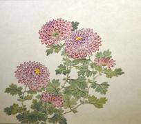 清代关槐《洋菊十六种图》册之紫霞觞