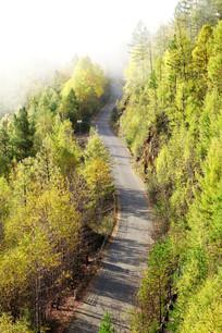 山林公路秋景