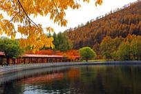 林区秋季山水风光