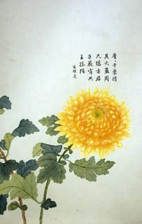 清代钱维城《洋菊图》卷之八