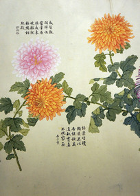 清代钱维城《洋菊图》卷之十二
