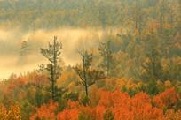 秋林雾瀑风光