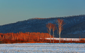 冬雪白桦林风光