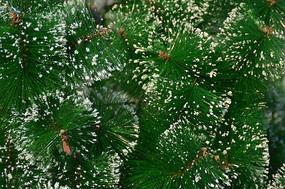 近拍圣诞装饰品圣诞树图片