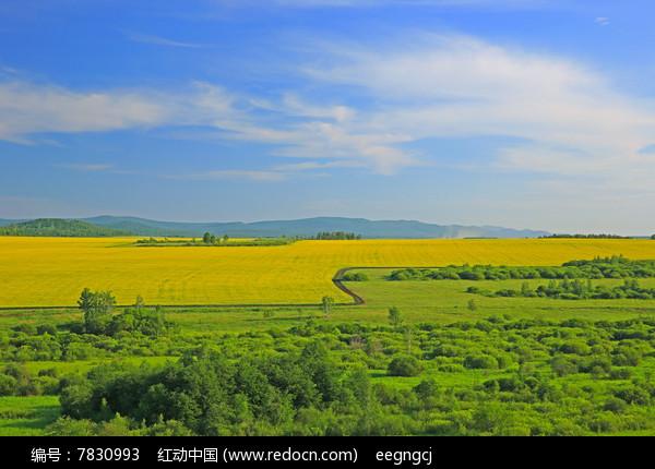 油菜花与绿草地风景图片