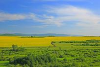 油菜花与绿草地风景