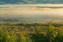 湿地林海晨雾景观