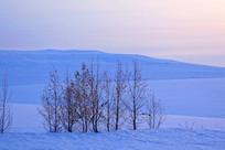雪原树林朝阳风景