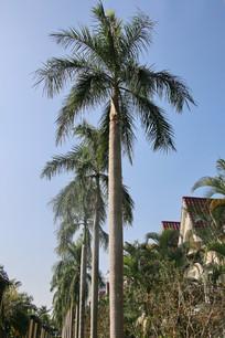 热带棕榈树林
