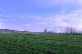 洁净如洗的蓝天下的麦田