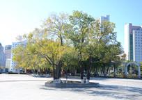 绿色繁茂大树