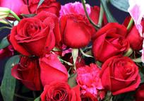 高清红玫瑰花卉图片