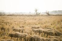 宽阔的麦田