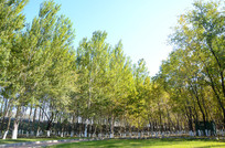 绿色森林树林