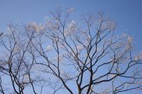秋天的一棵大树