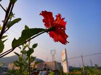 伸向天空的花朵