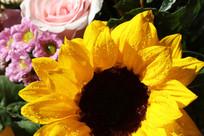 向日葵花卉特写