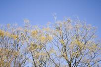 一片秋天的黄色的大树