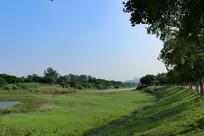 郊外杂草地