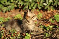 午后草坪上的小猫