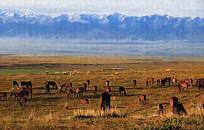 草原放牧风景