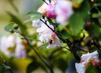 花在丛中笑
