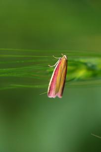 一只彩色的蛾子