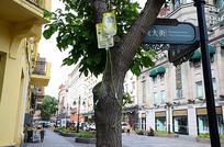 打针输液树木