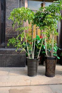 绿色盆景盆栽