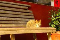 晒太阳的小猫