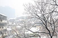被雪覆盖的树枝
