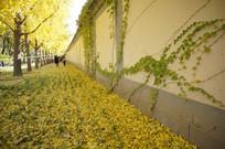 秋天的墙壁与地面