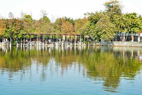 公园湖岸风景