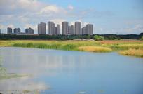 城市湿地秋季景色