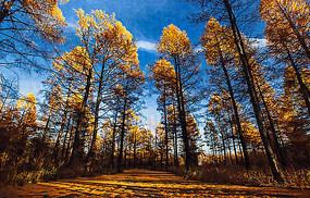 丛林秋色风景画