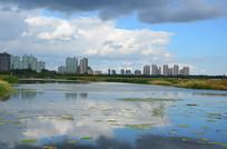 呼兰城市公园湿地景色