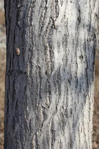 核桃树树干纹理