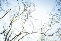 秋天的枯树