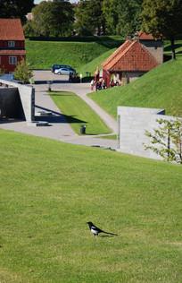 哥本哈根郊外景观